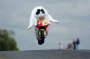 cat on motorcycle motorcycle officer barely escapes miss rideapart