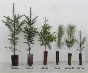 tree seedlings availability conifers conifers conifer plant bands conifer pots hardwoods