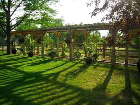 1000+ Images About Backyard Vineyards On Pinterest