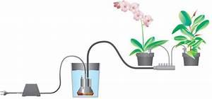 wie ihre pflanzen im haus den urlaub uberleben ideen zur With garten planen mit zimmerpflanzen bewässerung im urlaub