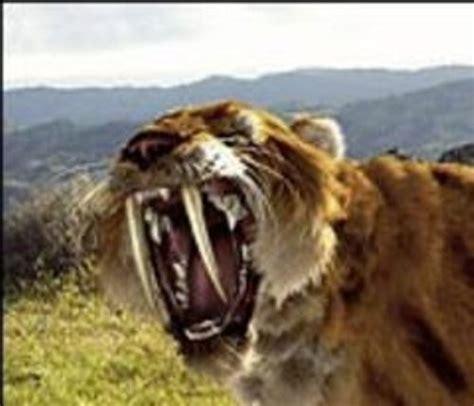 Sabertooth Tiger Facts