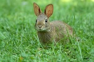 Bilder Von Steingärten : wassermelone f rs kaninchen d rfen sie davon fressen ~ Indierocktalk.com Haus und Dekorationen