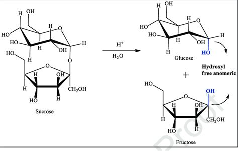 4 Sucrose Hydrolysis And Release Of Reducing Sugars