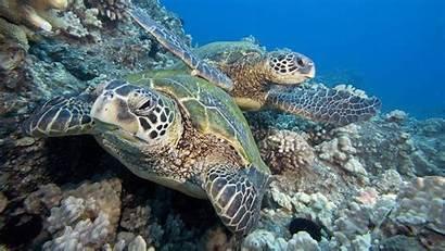 Sea Turtles Wallpapers Phone Scuba Marine Ocean