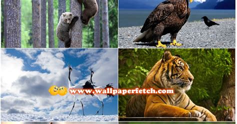Wallpaper Hd Animals Wallpaper Pack - wallpaper fetch beautiful animals hd wallpapers pack 1