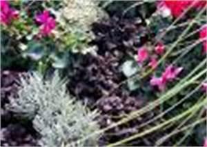 Balkonbepflanzung Im Herbst : bilder und notizen herbstblumen herbstbepflanzung balkon balkonbepflanzung im herbst garten ~ Markanthonyermac.com Haus und Dekorationen