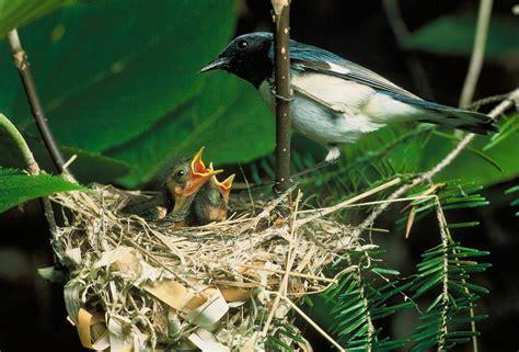 birds suffering  ptsd  symptoms shows  noise