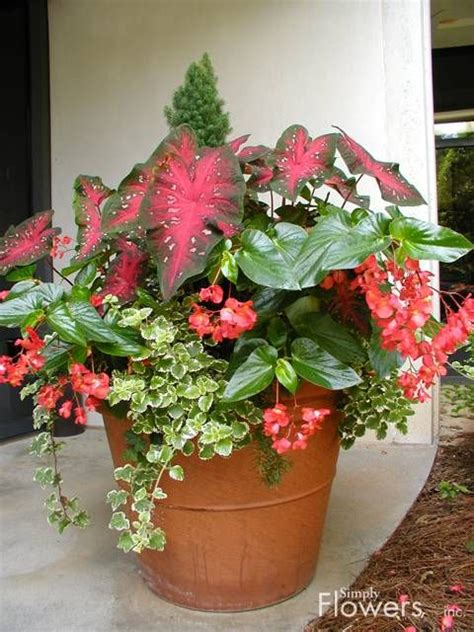 114 Best Shade Container Gardens Images On Pinterest