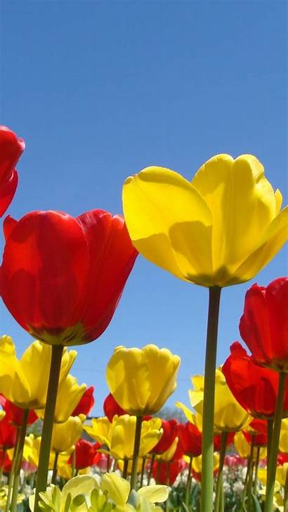 Iphone Spring Wallpapers Nature Flowers Flower Plus