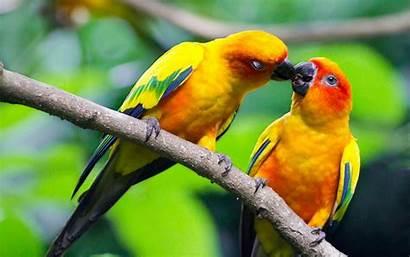 Birds Wallpapers13