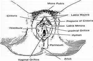 14 External Female Genitalia - Newborn Care