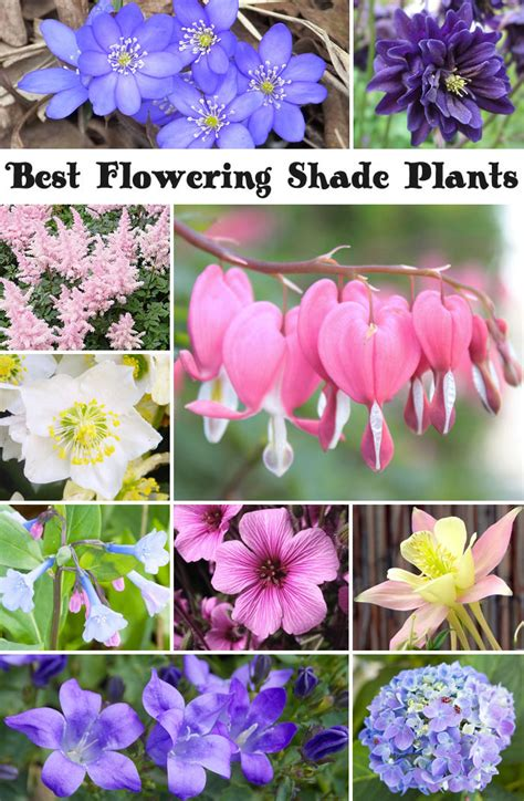 best plants and flowers for shade hello farmhouse