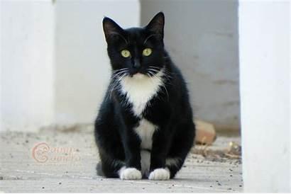 Cats Cat Tuxedo Kittens Kitten Catnipcamera Camera