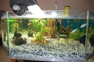exemple aquarium fait maison