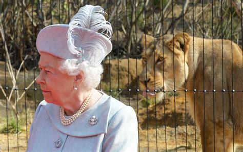 queen zoo london lion enclosure philip prince reina isabel unos leones merced vanidades