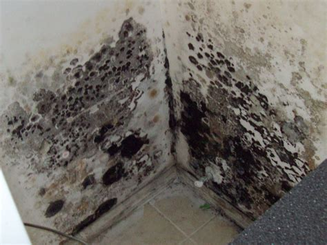 How To Remove Mold  Black Mold In Basement. Living Room Painting Designs. Casual Living Room. Re Arranging Living Room. Living Dining Room Combo. Recessed Lighting Living Room. Dfs Living Room Furniture. Cheap Black Living Room Furniture Sets. How To Make A Fort In The Living Room