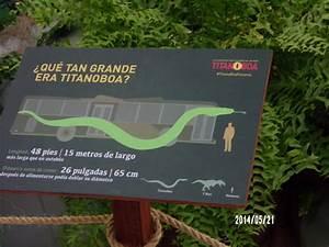 The gallery for --> Megalodon Vs Spinosaurus