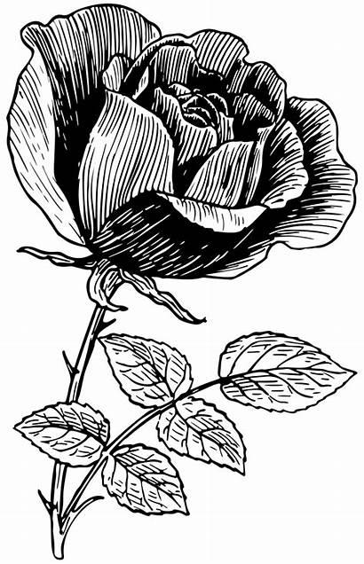 Rose Line Clip Onlinelabels Svg