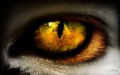 fantasy animal eye takiidesign deviantart