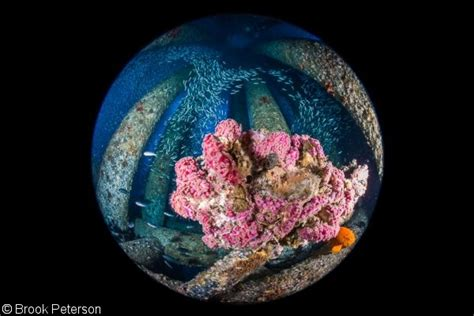 underwater photography   circular fisheye lens