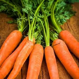 Organic Carrots: Scarlet Nantes (250mg)- Heirloom, Non-GMO ...  Carrot