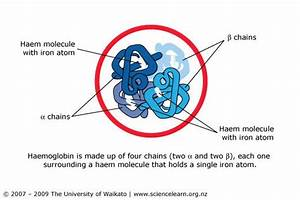 Haemoglobin Structure  U2014 Science Learning Hub
