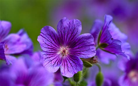 gorgeous purple hd desktop wallpapers  hd