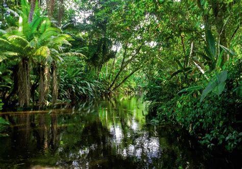 chambre d une ado grand tableau nature exotique avec cette rivière dans la