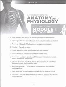 Advanced Biology  Human Body Tests  U0026 Solutions Manual 2nd