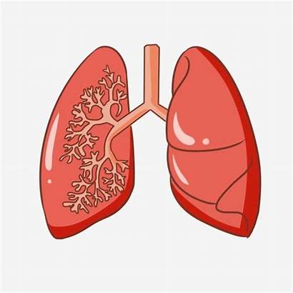 Lung Cartoon Organ Tube Clipart Human Lungs
