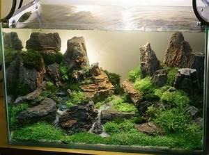 Aquarium Einrichten Beispiele : 1000 ideen zu garnelen aquarium auf pinterest garnelen im aquarium fugensplitt und fisch ~ Frokenaadalensverden.com Haus und Dekorationen