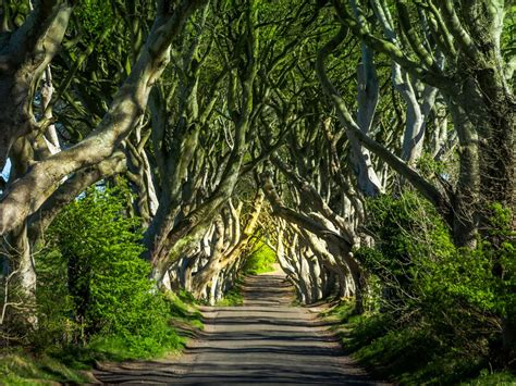11 Photos Of The Worlds Most Beautiful Trees Readers