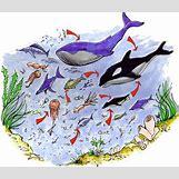 Mediterranean Monk Seal Food Web | 500 x 430 jpeg 67kB