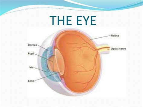 what is the colored part of the eye called science 3 parts of the eye