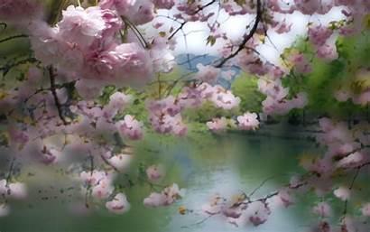Cherry Blossom Background Pastel Desktop Backgrounds Kyoto