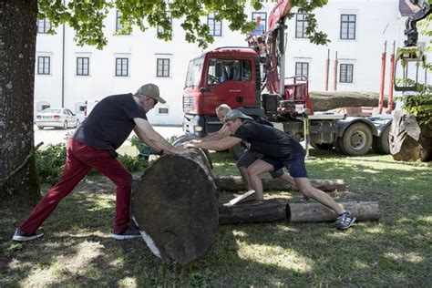Drevi začetek Mednarodnega simpozija kiparjev FORMA VIVA ...