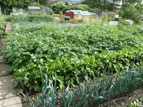 vegetable gardening blogs historical veggie facts suttons gardening grow how