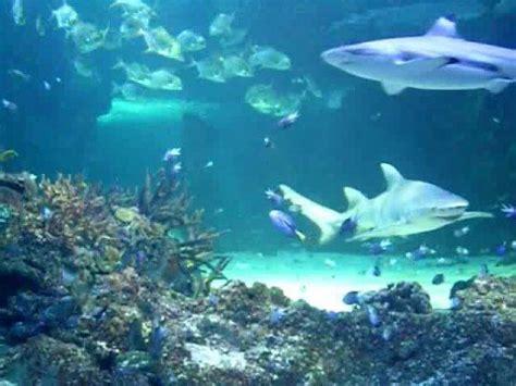 saens carnival of the animals aquarium the carnival of the animals aquarium