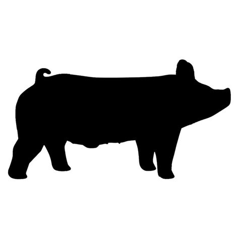 show pig silhouette  showing livestock show cattle