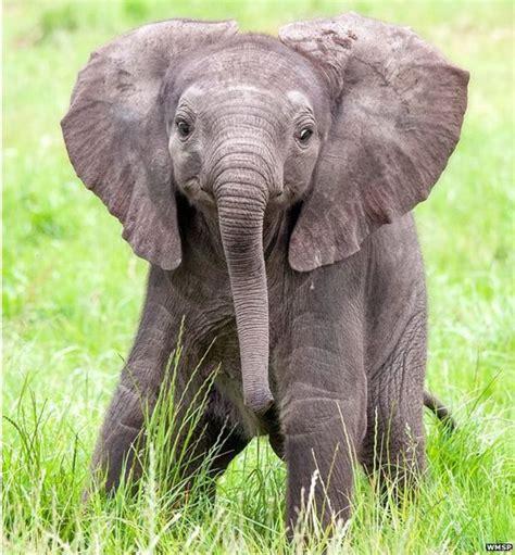 Awwsome Animals Why Do Baby Mammals Melt Our Hearts