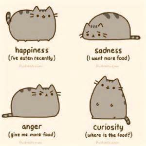 cat emotions your cats emotions makes me smile