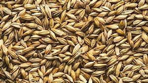 Is Barley Gluten