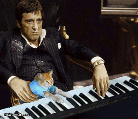 Cat Playing Piano Meme - al pacino with keyboard cat hilariousgifs com