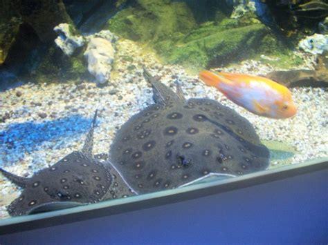 aquarium de limoges tarifs aquarium de limoges tarifs 28 images tarifs aquarium du limousin aquarium de limoges visite