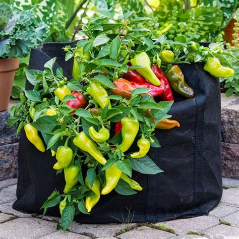best tomato grow bags tools and accessories tomato grow bag