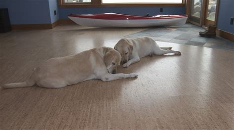 pet friendly hardwood floors green flooring sustainable flooring eco friendly flooring