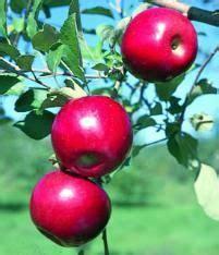 Jonafree Apple from Stark Bro's | Apple tree, Fruit trees ...