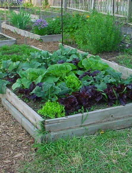 139 Best Gardening Images On Pinterest  Vegetable Garden