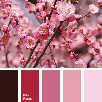 shades of cherry blossom color palette ideas