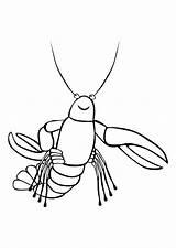 Coloring Kreeft Lobster Colorear Aragosta Colorare Krebs Kleurplaat Disegno Langosta Dibujo Malvorlage Colorat Crawfish Drawing Pintar Clip Cu Imagini Clipart sketch template